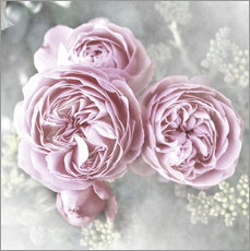 Wall Sticker  Roses in shabby style - Christine Bässler
