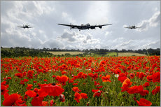 Wall sticker  Poppy Flypast - airpowerart