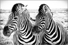Wall sticker  Two Zebras - Jan Schuler