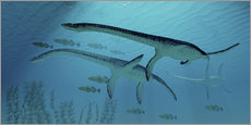 Wall sticker  Three Plesiosaurus dinosaurs migrate with a school of fish. - Corey Ford