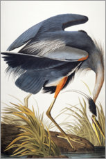 Wall sticker  Great Blue Heron - John James Audubon
