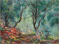 Gallery print  Olive Trees in the Moreno Garden - Claude Monet