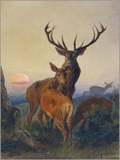 Gallery print  A Stag with Deer at Sunset - Charles Jones