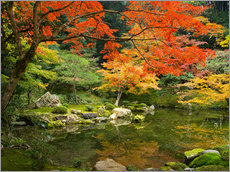 Gallery print  Japanese garden in autumn with red maple tree - Jan Christopher Becke