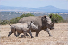 Gallery print  White rhino with baby - Ingo Gerlach