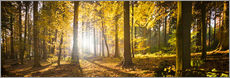 Wall sticker  Autumn forest backlit with sunshine and yellow autumn leaves - Jan Christopher Becke