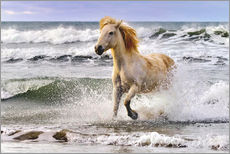 Wall Stickers  A Camargue horse running in the surf - Adam Jones