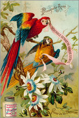 Wall sticker  Parrots, macaws and passionflowers - European School