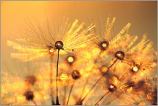 Wall sticker Dandelion golden beads