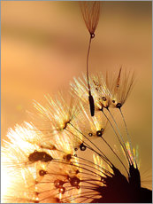 Wall sticker Dandelion golden touch