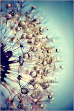 Wall sticker  Dandelion blue crystal - Julia Delgado
