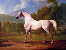 Wall sticker  Racehorse Mambrino - George Stubbs