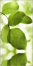 Gallery print  Green leaves - Atteloi
