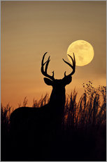 Gallery print  Whitetail Deer with full moon - Larry Ditto