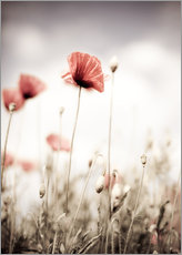 Gallery print  Red Poppy Flowers - Nailia Schwarz