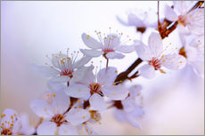 Wall sticker cherry blossoms