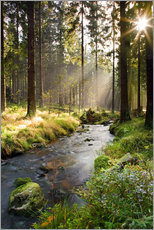 Gallery print  Bode river in Harz, Germany - Dave Derbis