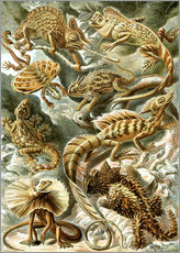 Gallery print  Lacertilia - Ernst Haeckel