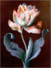 Gallery print  Parrot tulip with butterfly and beetle - Barbara Regina Dietzsch