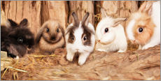 Gallery print  bunnys - Photoplace Creative