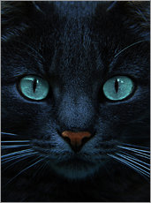 Gallery print  eyes of blue - Joachim G. Pinkawa