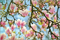 Gallery print  Magnolias look in the Spring - Julia Delgado
