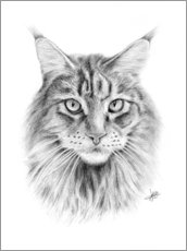 Gallery print  Maine Coon Cat - Christian Klute