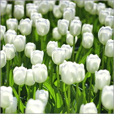 Wall sticker  Meadow of tulips - pixelliebe