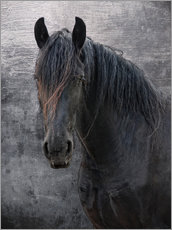 Gallery print  Horse with no name - Joachim G. Pinkawa
