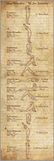 Gallery print  Surya Namaskara the sun salutation(vertical) yoga poster - Sharma Satyakam