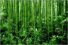 Gallery print  bamboo forest - GUGIGEI