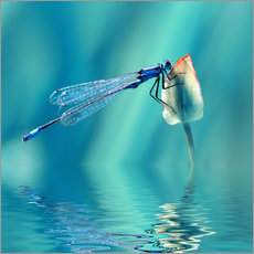 Gallery print  Dragonfly with Reflection - Atteloi