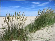 Gallery print  thriving beach grass in the dunes - Susanne Herppich
