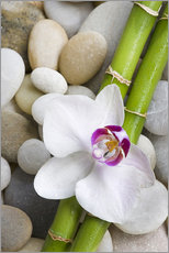 Gallery print  Bamboo and orchid - Andrea Haase Foto