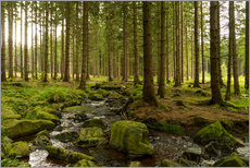 Gallery print  forest with creek - Oliver Henze
