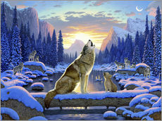 Gallery print  Wolf learns the howling - Chris Hiett
