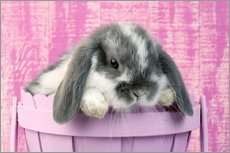 Gallery print  Rabbit in a flower pot - Greg Cuddiford