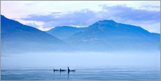 Gallery print  Three Killer whales in mountain landscape at Vancouver Island - Jürgen Ritterbach