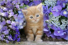 Gallery Print  Ginger cat in flowers - Greg Cuddiford