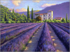 Gallery print  Lavender field with Abbey - Jay Hurst