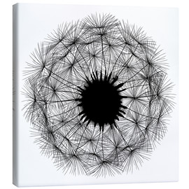 Canvas  dandelion - black - agnes.b