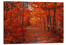Aluminium print  Colorful autumn - Steffen Gierok