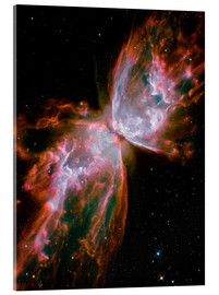 Acrylic print  The Butterfly Nebula