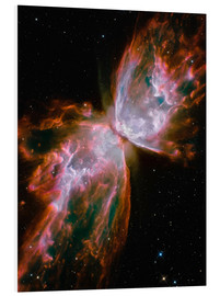 Foam board print  The Butterfly Nebula - Stocktrek Images