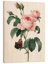 Wood print  Rose of a Hundred Petals - Pierre Joseph Redouté