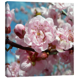 Canvas print  Cherry Blossoms - blackpool