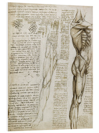 Foam board print  The muscles - Leonardo da Vinci