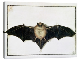 Canvas print  Bat - Albrecht Dürer