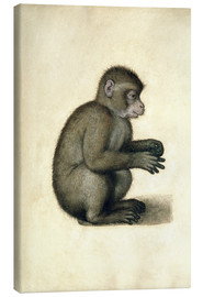 Canvas  A Monkey - Albrecht Dürer
