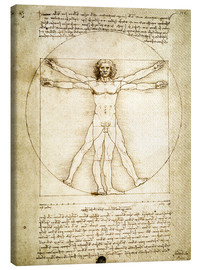 Canvas print  The Proportions of the human figure - Leonardo da Vinci